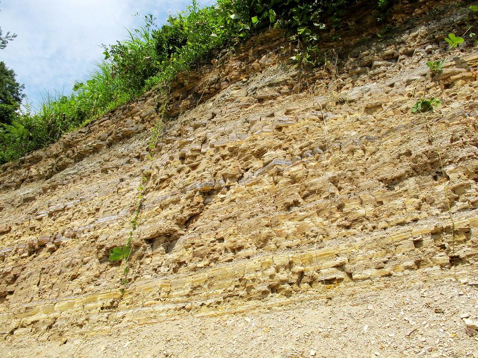 木の葉化石園、解説のページ
